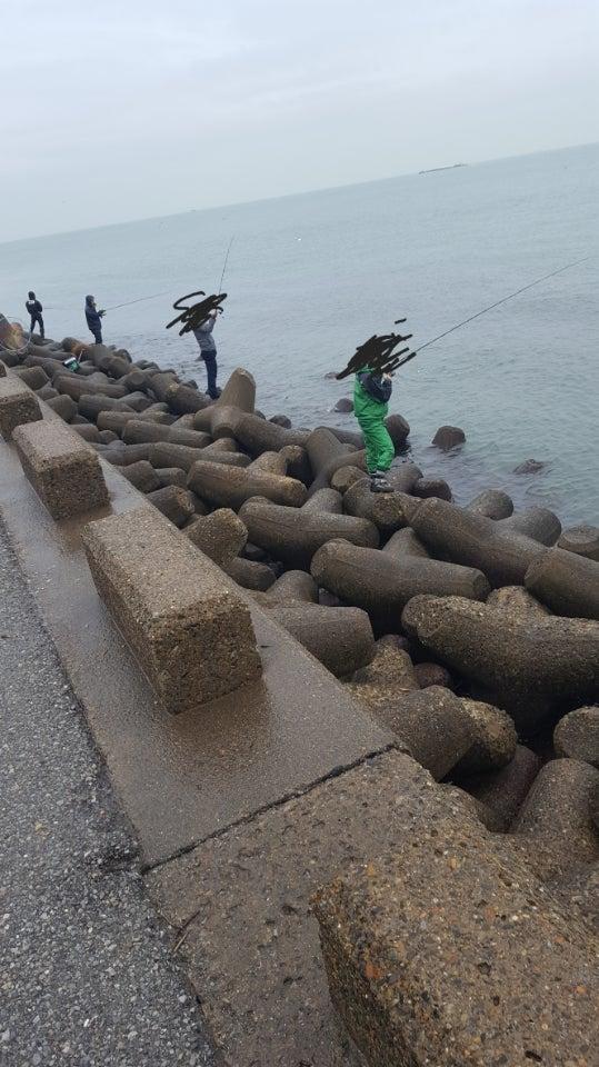浦安イナダ、シーバス | ヘチ釣りメインで多種目