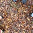 秋の訪れ カヤの平を…