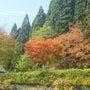 秋ですねぇ・・