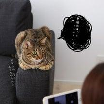 重版出来&猫びより掲…