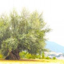 大樹の想い*・
