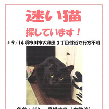 迷い猫JIN①捜索帖