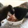 小さな猫ちゃんの方が、保護っ子です  追記の画像