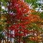 バークシャーの紅葉
