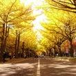 秋の札幌市