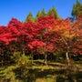 旭川ダム公園の紅葉