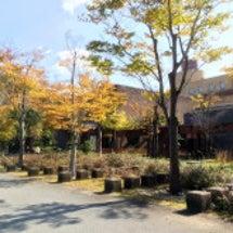 姫路でテニス合宿!