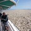 ▼唸声ホンジュラス写真/プラスチック海の画像