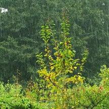 えきでんと雨と...