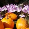 謎の花の画像