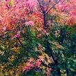人の心は秋の空と同じ