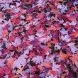 秋のおすそわけ