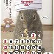 11月の俵太カレンダ…