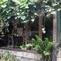 バリのオシャレカフェ