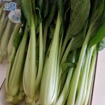 小松菜deグリーンカ…