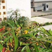A様邸の植栽