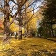 秋色・・・中島公園