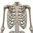 上部肋骨の固さ予防