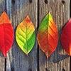 参加者募集中! 11/09(木)は恵比寿英会話サークルの活動日の画像