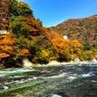 紅葉最高潮の箒川、の…