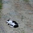 道の真ん中で猫が !…
