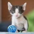 白黒子猫 ウィンちゃ…