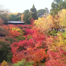 紅葉の名所「東福寺」…
