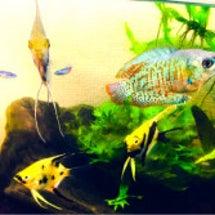 高槻の魚類たち
