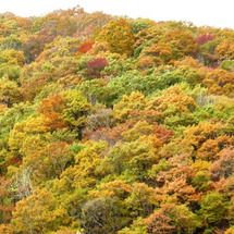 紅葉はひるがの高原の…