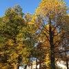 張込み中に秋を感じるの画像
