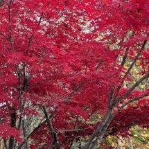 清田公園の秋(紅葉見…