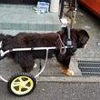 車椅子の練習しました