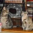 兄猫と妹猫の差…