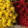 11月の花は??