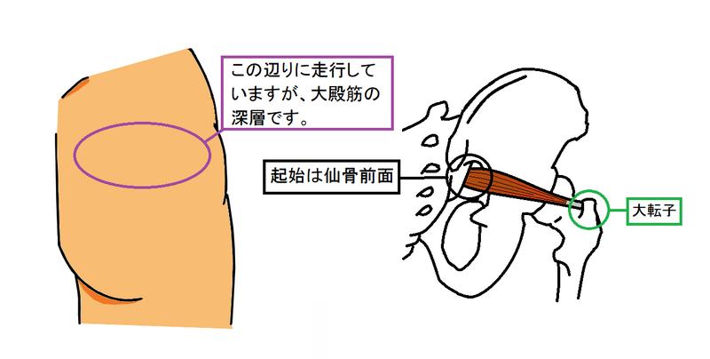 作用 梨 状 筋