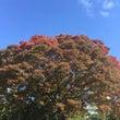 浜離宮の紅葉とアラジ…