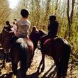 馬と過ごした時間の追…