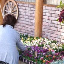 冬のお花の販売1日目…