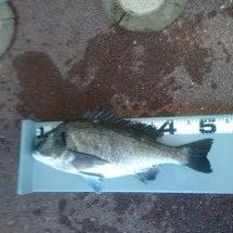 今日の釣行