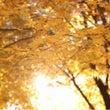 秋ですね(^-^)