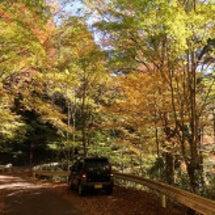 中くらいの秋、見ぃつ…