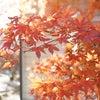 軽井沢での未来タイムが、私の至福の幸せ♡の画像