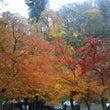 秋真っ盛り、冬間近(…