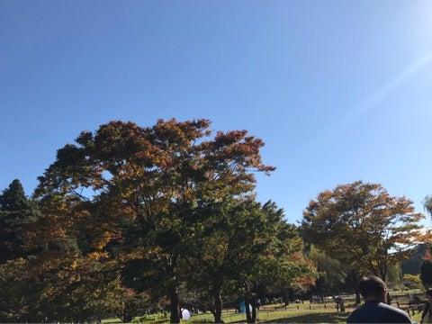 o0480036014064326201 - ☆11月3日(金)☆toiro西谷