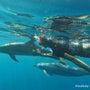 イルカと泳ぐ!!ハワ…