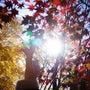 「秋」見つける
