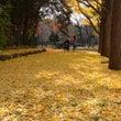 中島公園・・・秋色