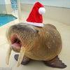 鳥羽水族館クリスマスイベント「セイウチサンタとビリビリツリー」11月23日より開催!の画像