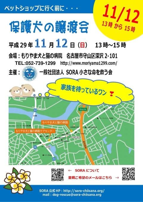 愛知県名古屋市守山区にて2017年11月12日(日)に開催する保護犬の譲渡会お知らせ