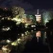 京都 東寺の紅葉ライ…